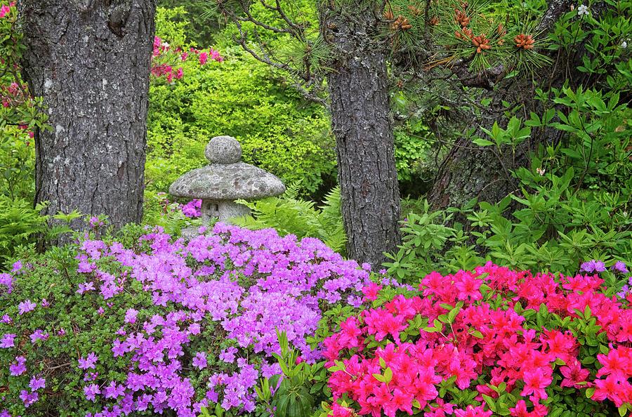 Asticou Gardens #2 by Dennis Kowalewski