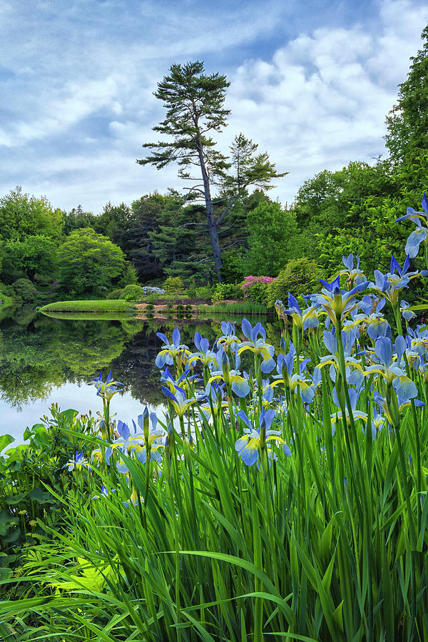 Asticou Gardens #1 by Dennis Kowalewski
