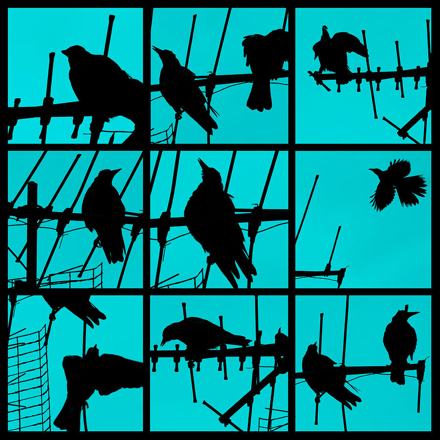 Birds Photograph - Asylum by Andrew Paranavitana