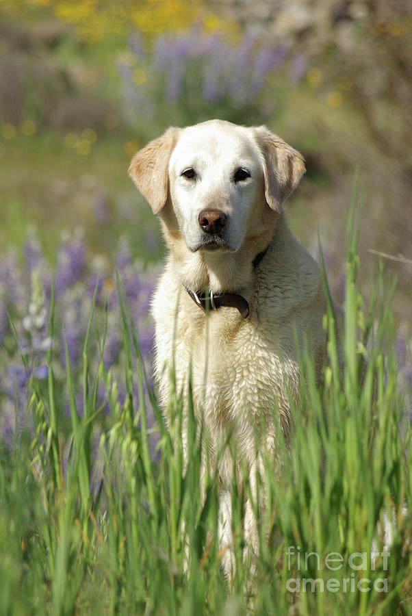 Dog Photograph - At Attention by Jim and Emily Bush