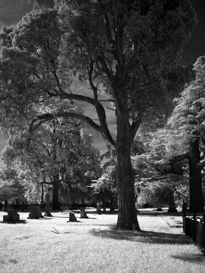Trees Photograph - At Peace by Michele Caporaso