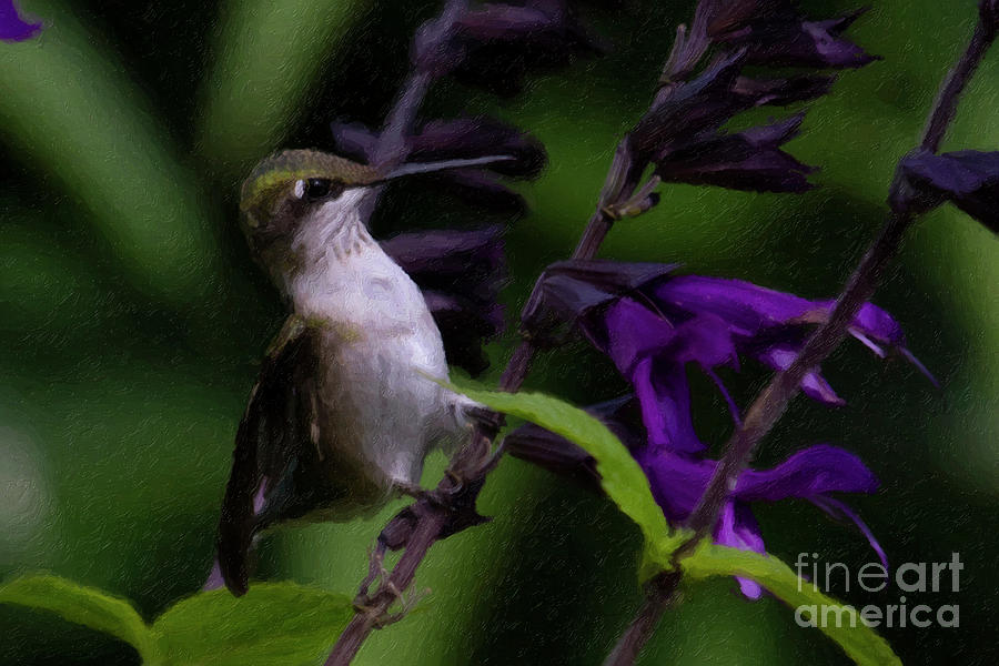 Hummingbird Painting - At The Amistad by C L Lassila