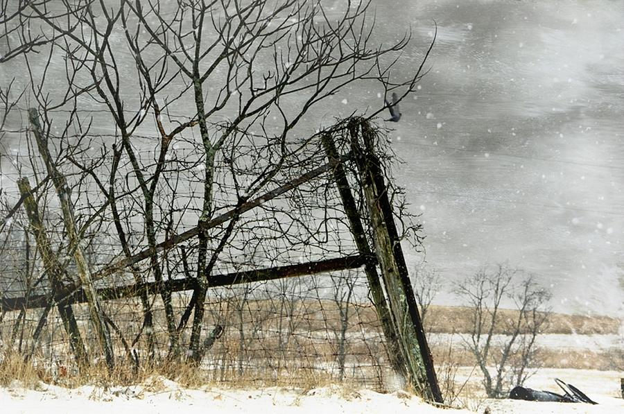 Fence Post Photograph - At The End...fence Post by Stephanie Calhoun