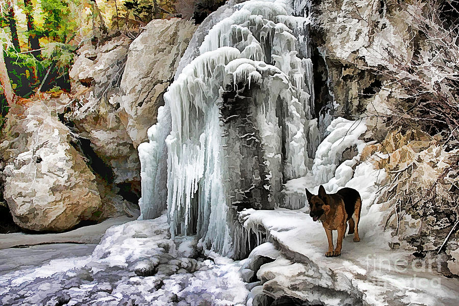 German Shepherds Photograph - At the Falls by Roland Stanke