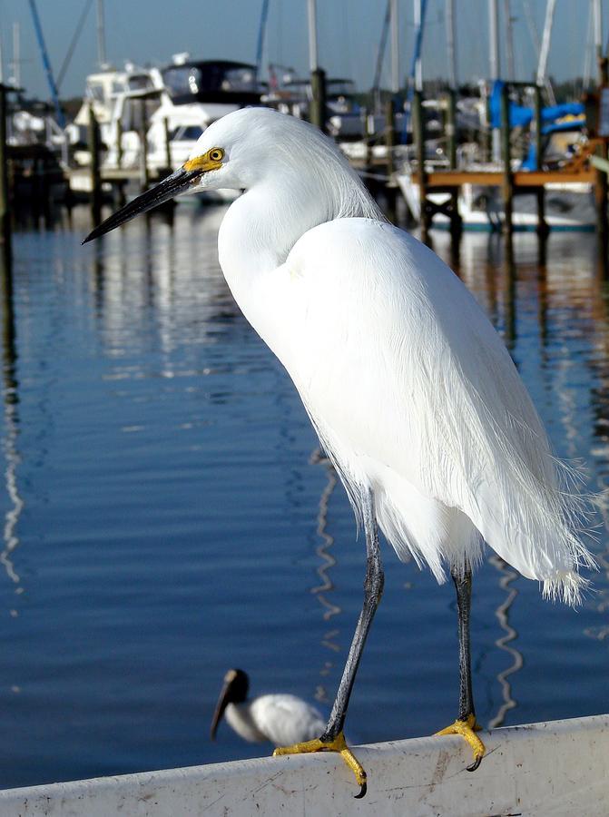Nature Photograph - At The Marina by Kimberly Camacho
