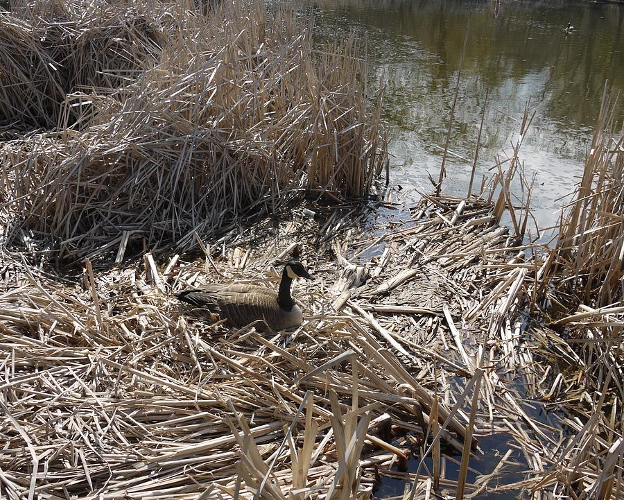 Pond Photograph - At The Pond by Heather Hennick