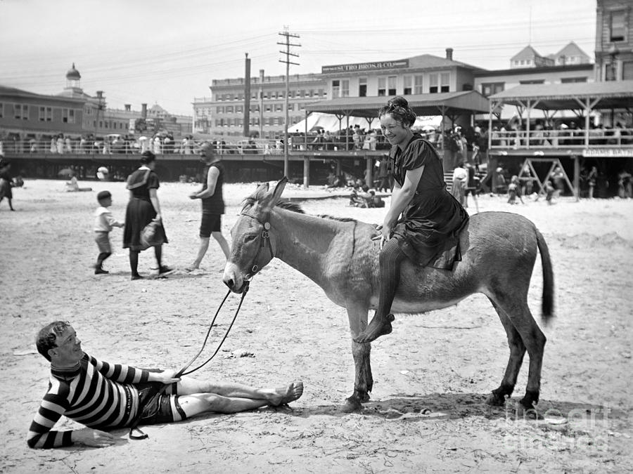 1901 Photograph - Atlantic City: Donkey by Granger