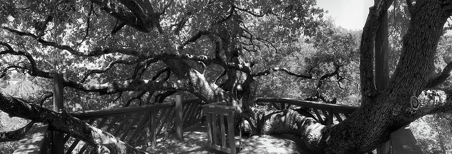 Oak Tree Photograph - Attack Of The Oak by Douglas Craig