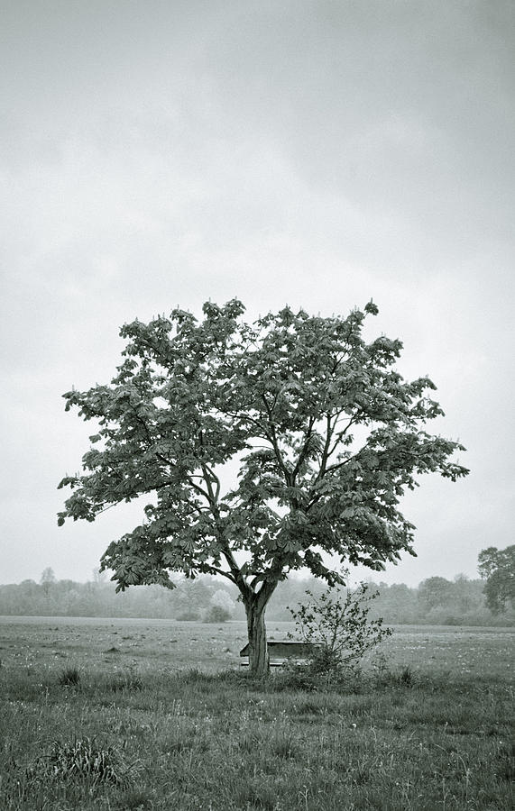 Tree Photograph - August In England by Andy Smy
