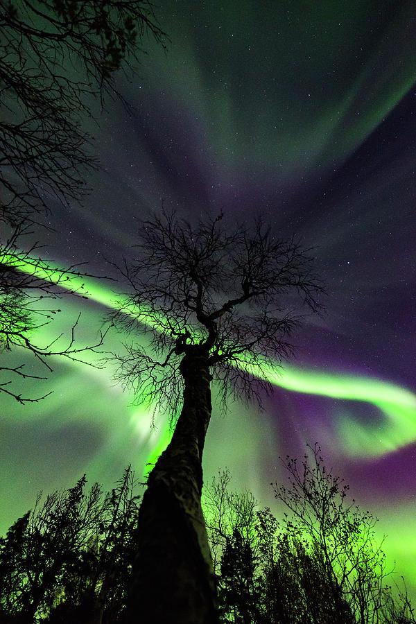Aurora Borealis Photograph - Aurora and The Tree by Kolbein Svensson