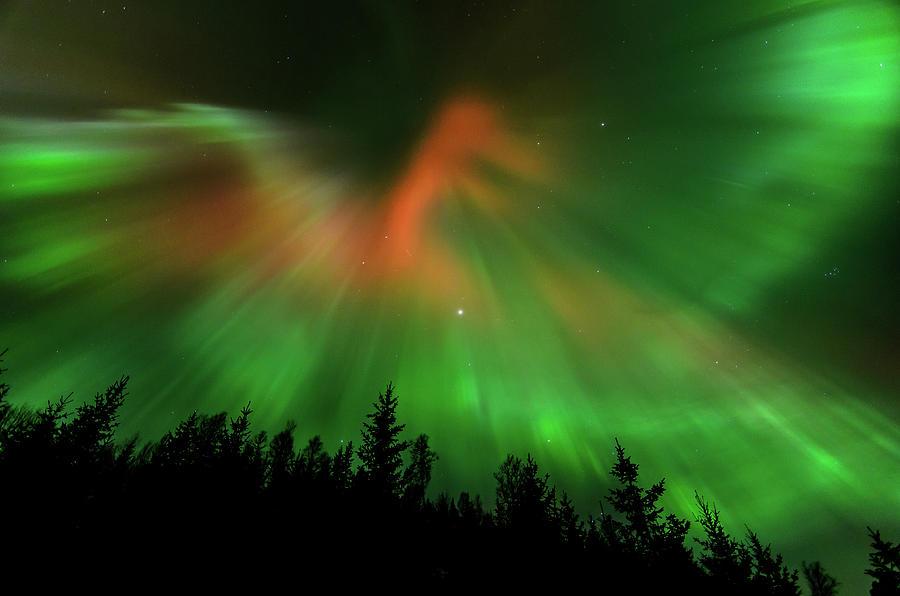 Aurora Photograph - Aurora Bird by Kolbein Svensson