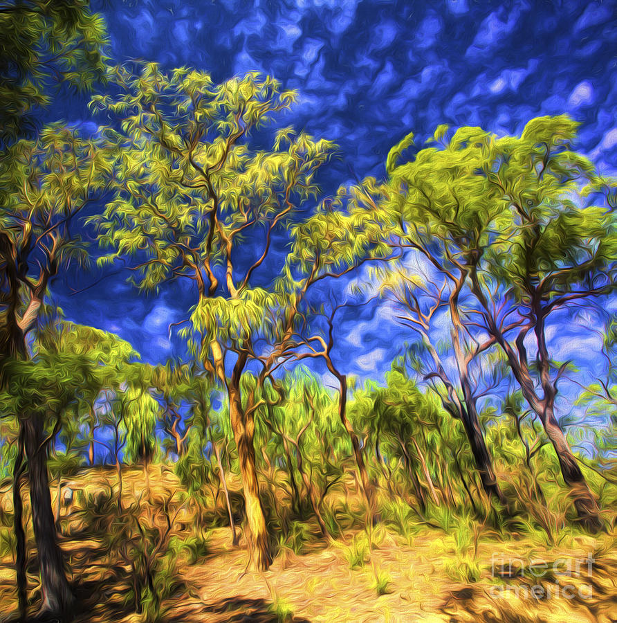 Australian Bush Photograph - Australian Bush by Sheila Smart Fine Art Photography