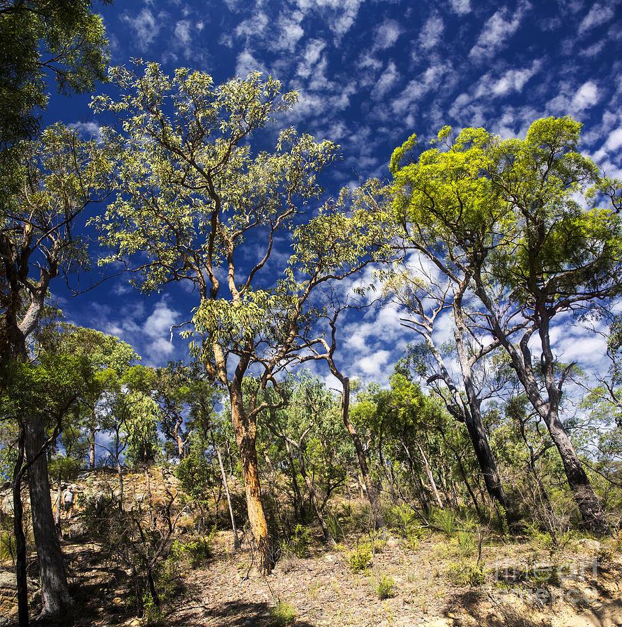 Australian Bush Photograph - Australian Bushland by Sheila Smart Fine Art Photography