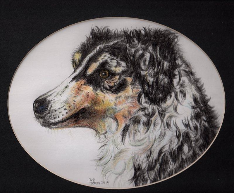 Dog Drawing - Australian Shepherd Della Mae by Chris Bajon Jones