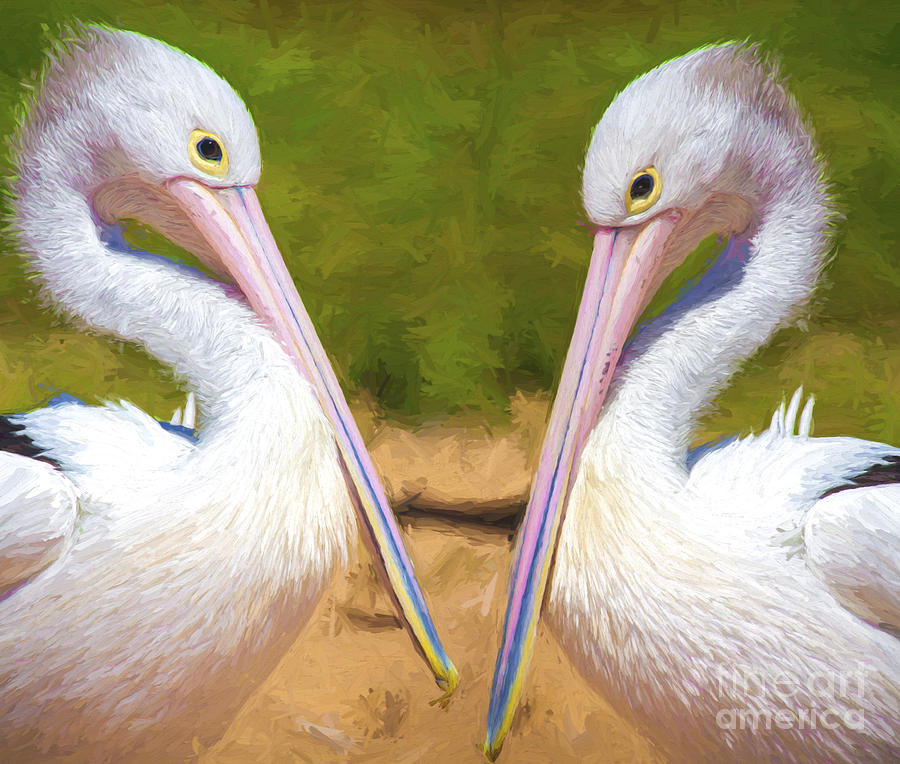 Bird Photograph - Australian White Pelicans by Sheila Smart Fine Art Photography
