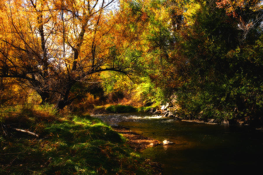 Tree Photograph - Autum Spring by Mark Courage
