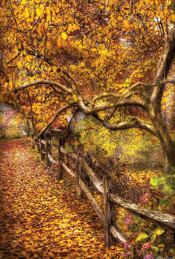 Savad Photograph - Autumn - Landscape - Country Road Side by Mike Savad