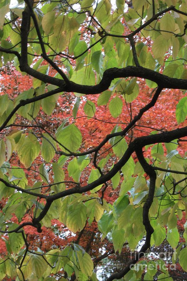 Fall Photograph - Autumn 7 by Carol Groenen