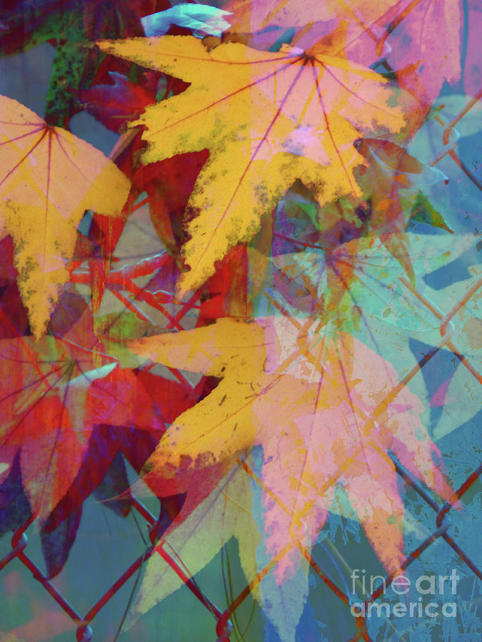 Abstract Photograph - Autumn Abstract by Robert Ball