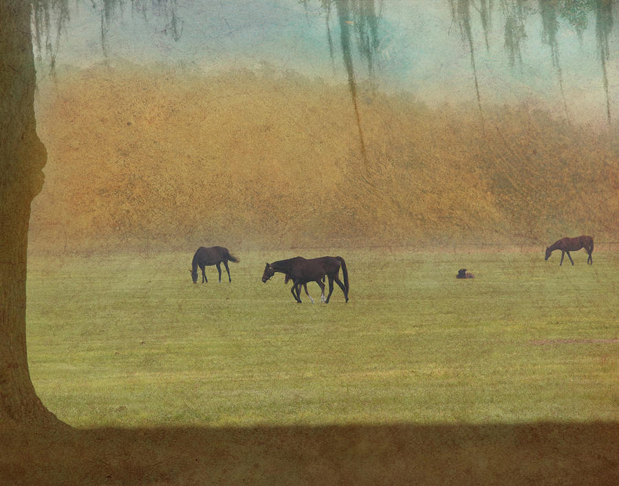 Outside Photograph - Autumn Afternoon by Eleszabeth McNeel