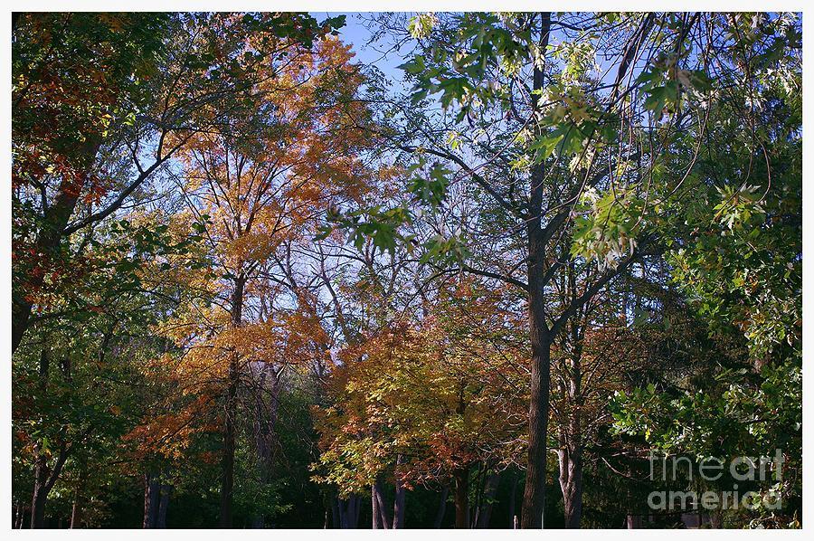 Autumn Air Photograph