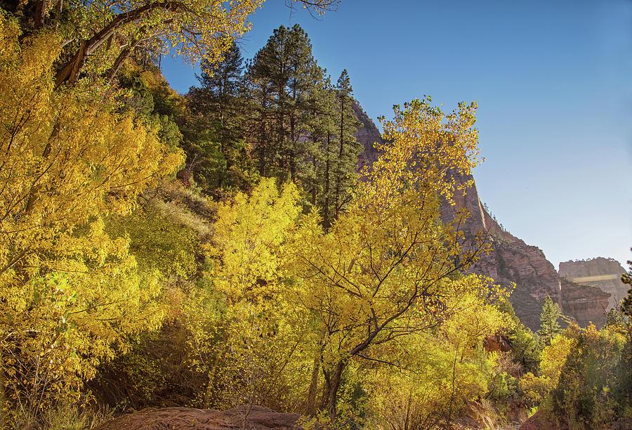 Autumn along Kolob creek by Kunal Mehra