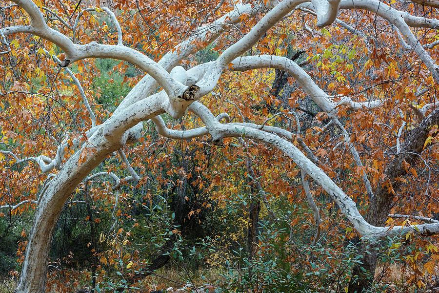 Autumn Arms Photograph