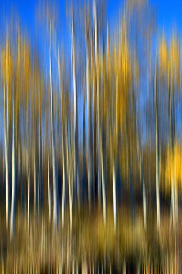 Autumn Aspens - Abstract by Nikolyn McDonald