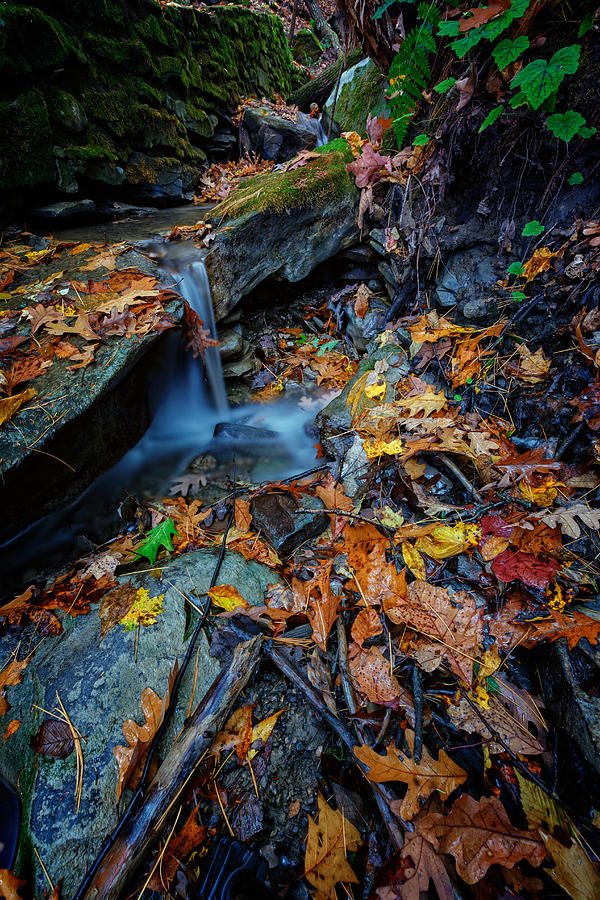 Autumn Photograph - Autumn At A Mountain Stream by Rick Berk