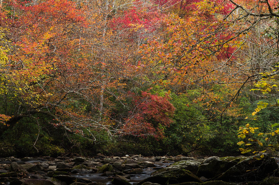 Autumn Photograph - Autumn At Deep Creek by William Shackelford