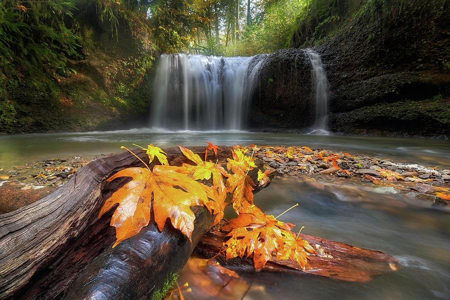 Hidden Falls Photograph - Autumn At Hidden Falls by David Gn