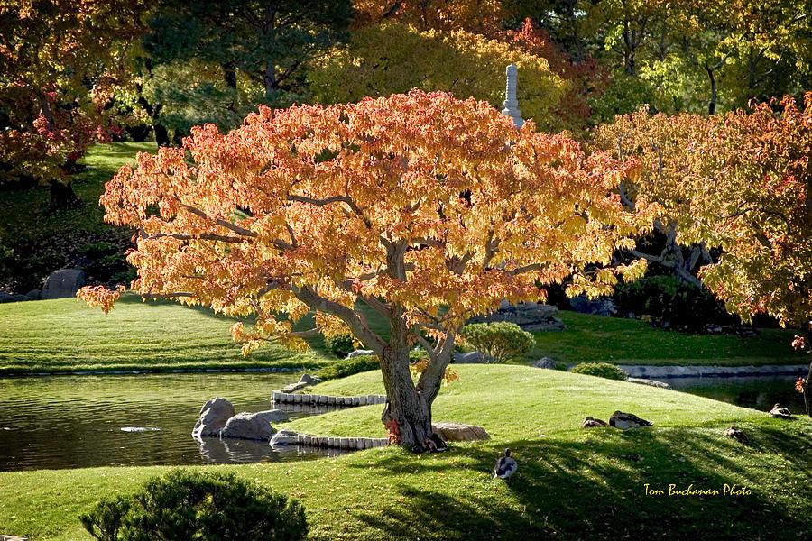 Japanese Garden Photograph - Autumn At Nikka Yuko by Tom Buchanan