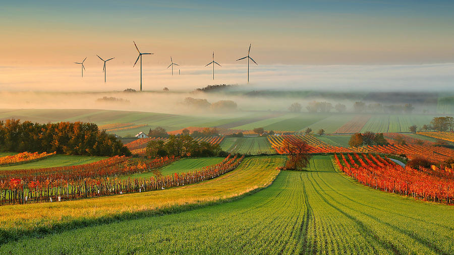 Landscape Photograph - Autumn Atmosphere In Vineyards by Matej Kovac