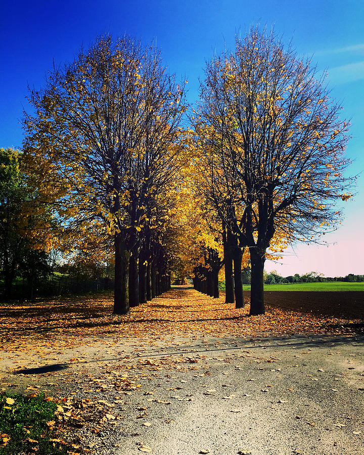 Tree Photograph - Autumn Avenue by Niki Mastromonaco