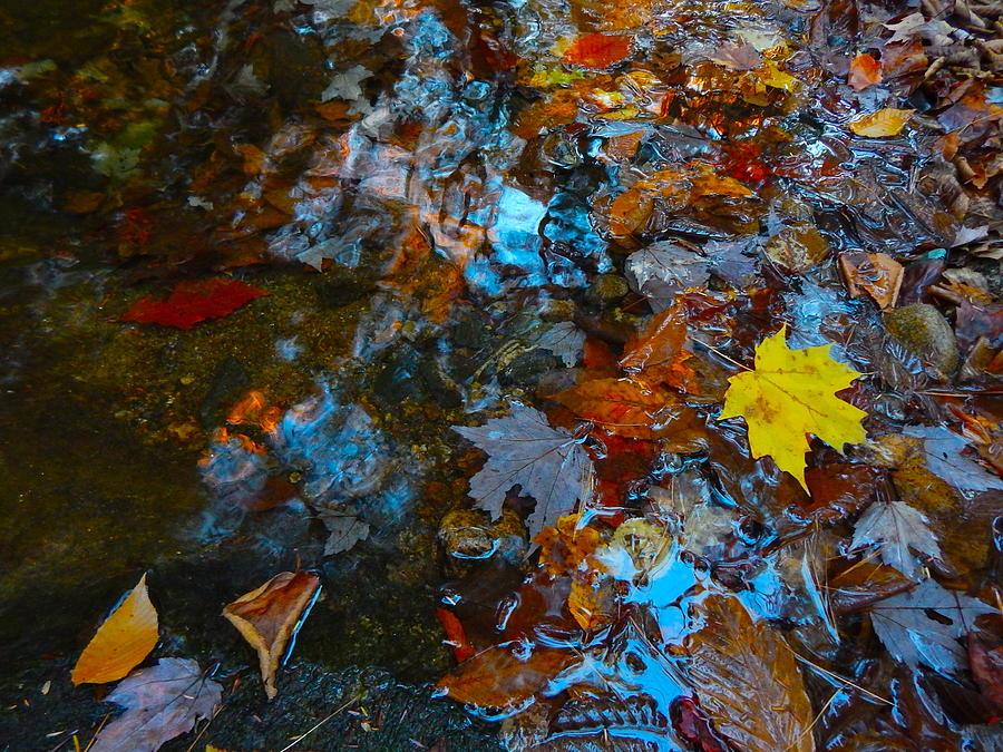Autumn Landscape Photograph - Autumn B 2015 121 by George Ramos