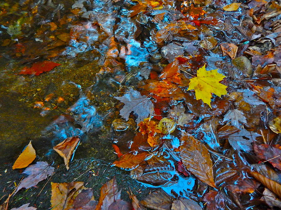 Autumn Landscape Photograph - Autumn B 2015 123 by George Ramos