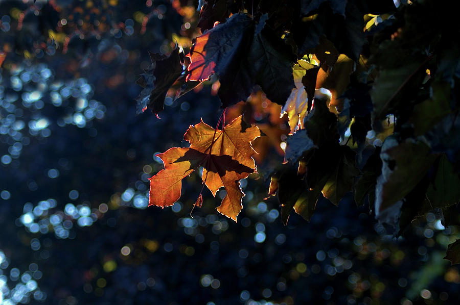 Autumn Backlit by JGracey Stinson