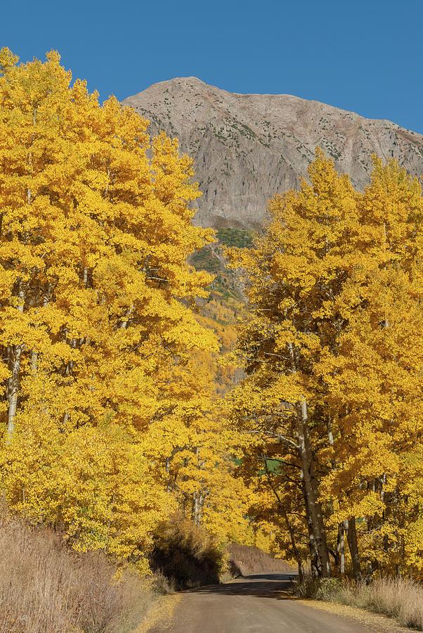 Autumn Backroad Photograph