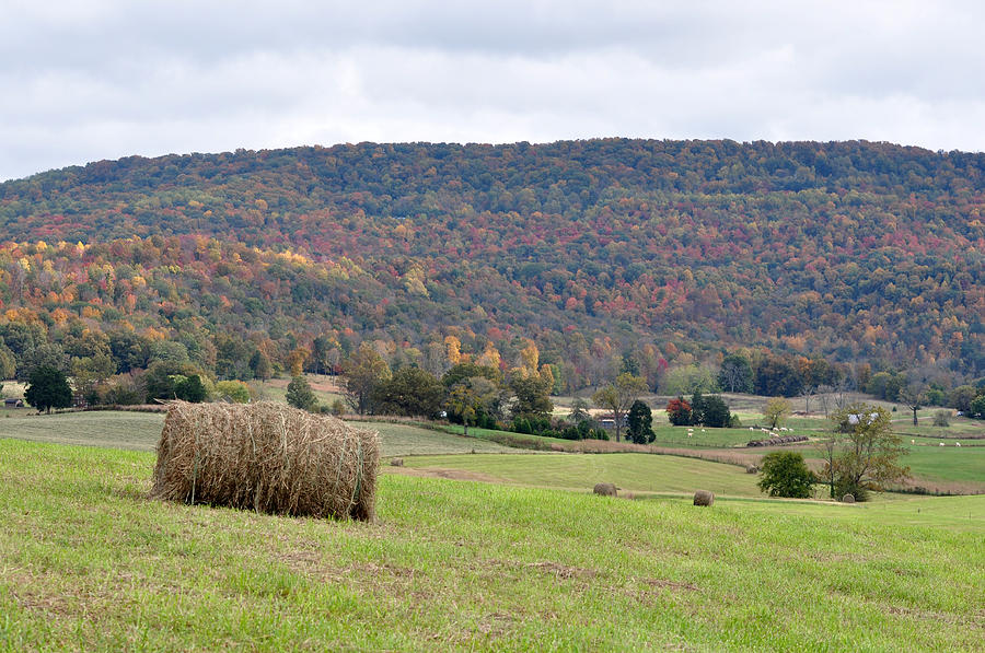 Landscapes Photograph - Autumn Bales by Jan Amiss Photography