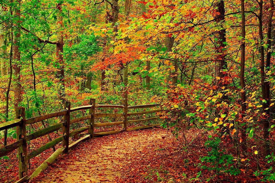 Autumn Landscapes Photograph - Autumn Bend - Allaire State Park by Angie Tirado