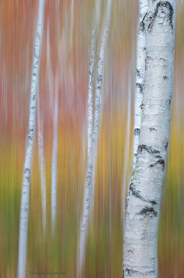 Autumn Birch Impressions by Expressive Landscapes Nature Photography