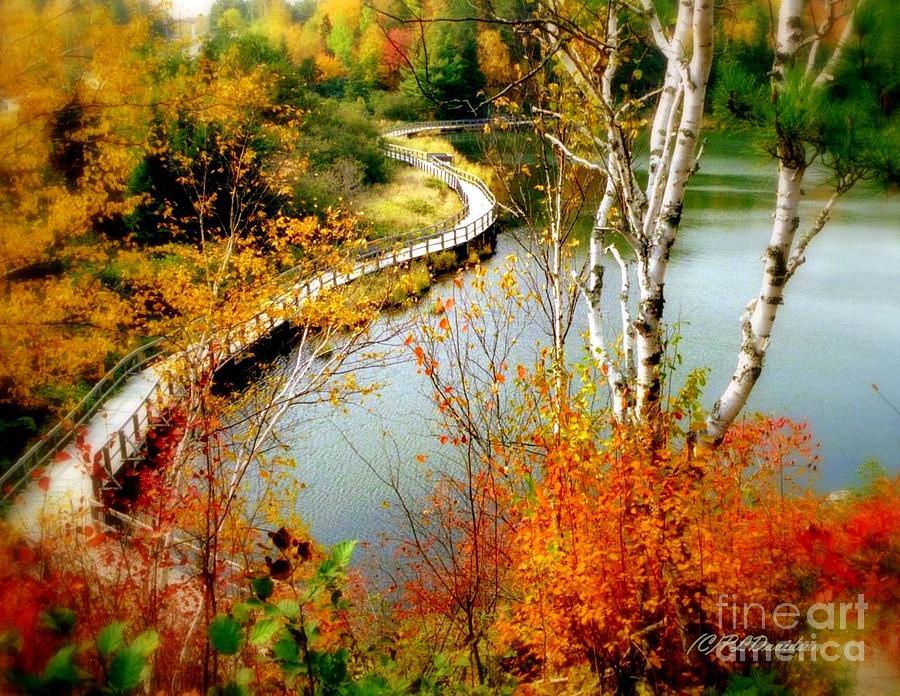 Autumn Photograph - Autumn Birch Lake Boardwalk by Patricia L Davidson