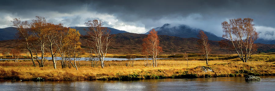 Rannoch Moor Photograph - Autumn Birches by Peter OReilly