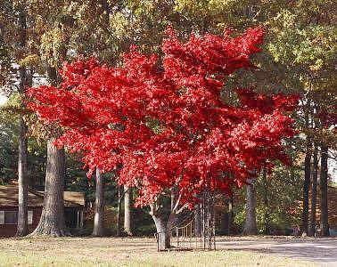 Trees Photograph - Autumn Blaze by Linda A Waterhouse