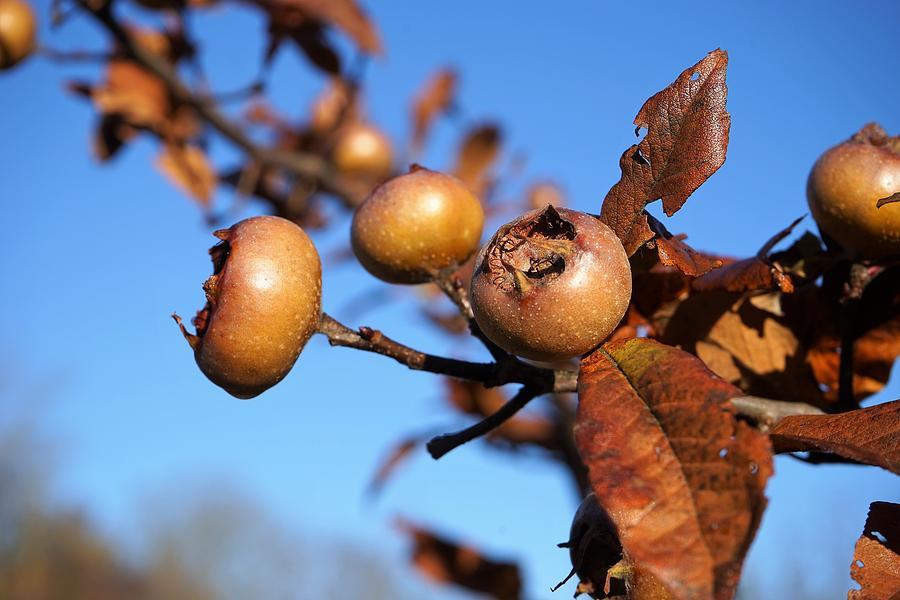 Autumn Photograph - Autumn bounty by Christian Trajkovski