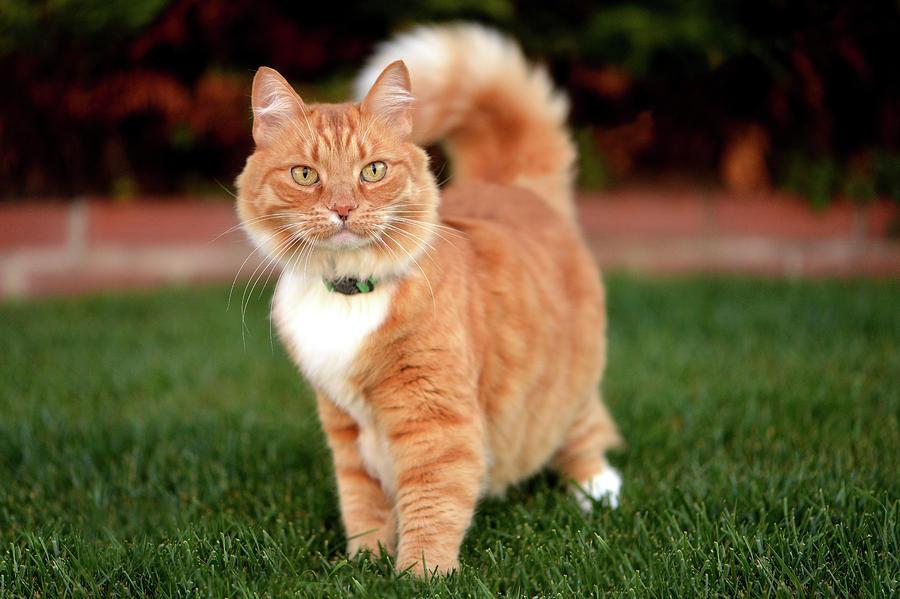 Orange Cat Photograph - Autumn Breeze by Josh Norem