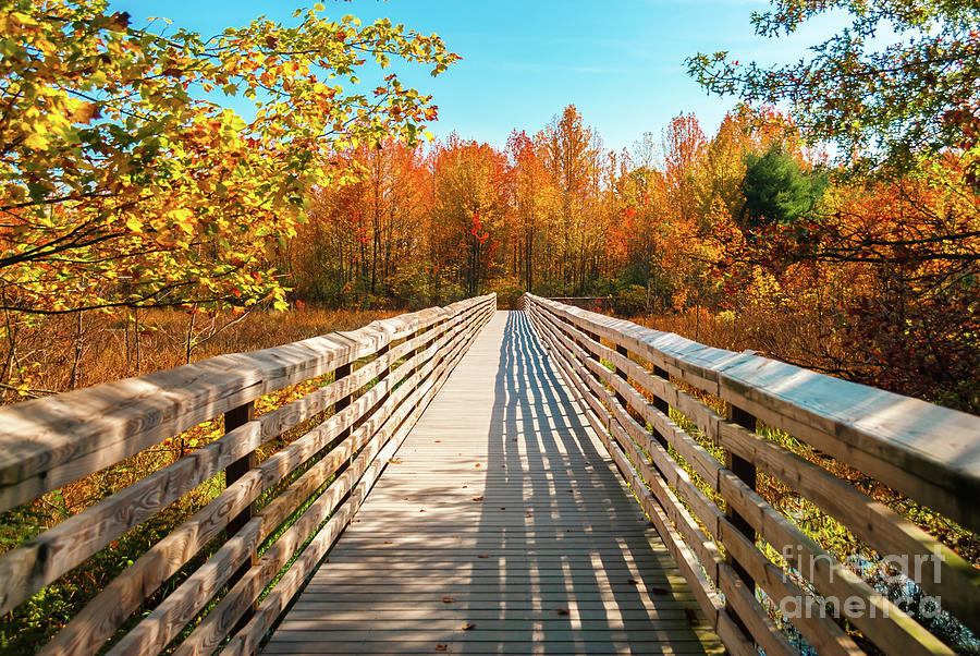 Autumn Bridge by Anthony Sacco