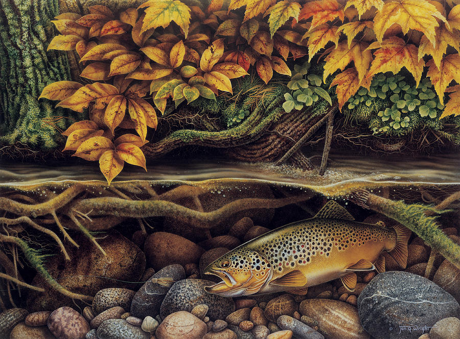Jon Q Wright Painting - Autumn Brown Trout by JQ Licensing