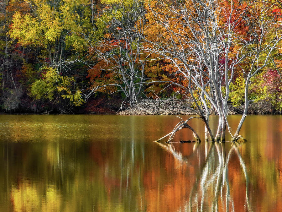 Autumn by the Lake by David Kuhn