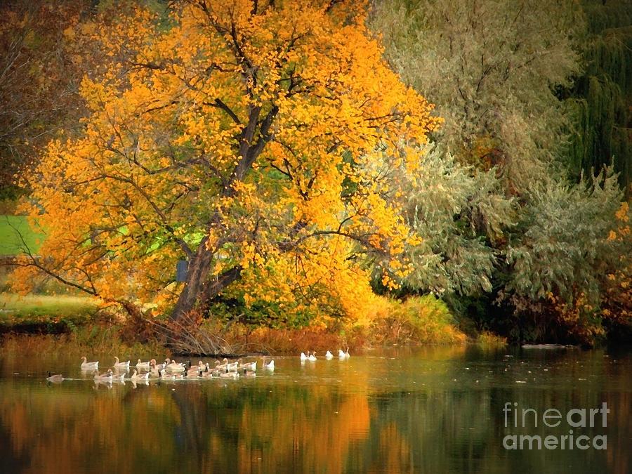 Fall Photograph - Autumn Calm by Carol Groenen